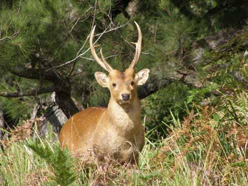 Hog deer hunt pictures